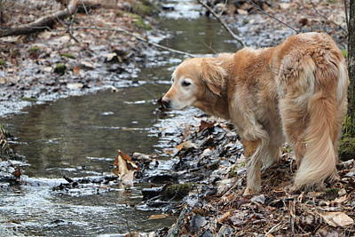 Golden Retriever Photograph - What Will My Mother Say by Elizabeth Dow
