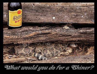 Photograph - What Would You Do For A Shiner by JC Findley