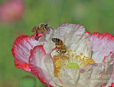 Poppy Wall Art - Photograph - What You Doing? by Gary Wing