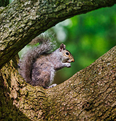 Photograph - Whata Nut by Paul Ross