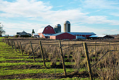 Photograph - Whatcom County Berry Dairy Farm by Tom Cochran
