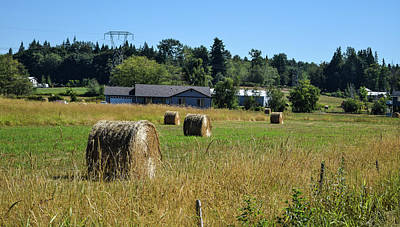 Photograph - Whatcom County Hay Bales by Tom Cochran