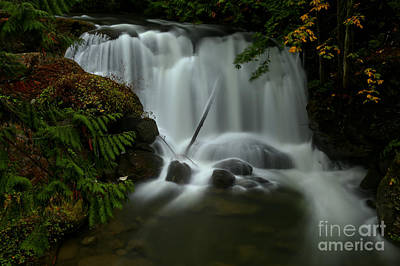 Photograph - Whatcom Falls by Adam Jewell