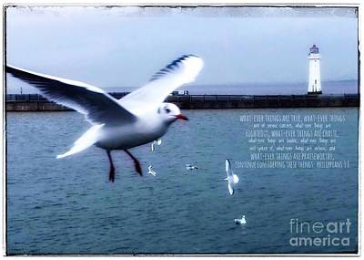 Photograph - Whatever Things Are True Seabirds by Joan-Violet Stretch