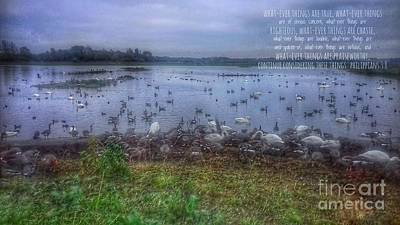 Photograph - Whatever Things Are True Wetlands by Joan-Violet Stretch