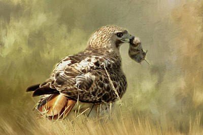 Red Tail Hawk Digital Art - What's For Lunch by TnBackroadsPhotos