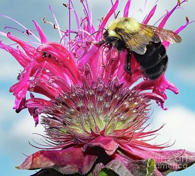 Sean - Whats In A Name Bee Balm by Cindy Treger