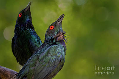 Starlings Wall Art - Photograph - What's Up There? by Jeremy Dufault