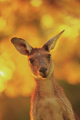 Print featuring the photograph What's Up, Yanchep National Park by Dave Catley
