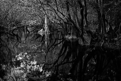 Photograph - What's Waiting Beneath Still Waters by Guy Shultz