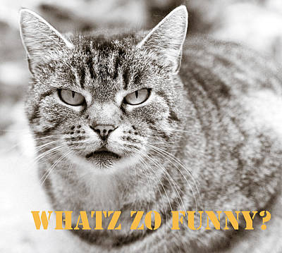 Funny Cat Photograph - Whatz Zo Funny by Frank Tschakert