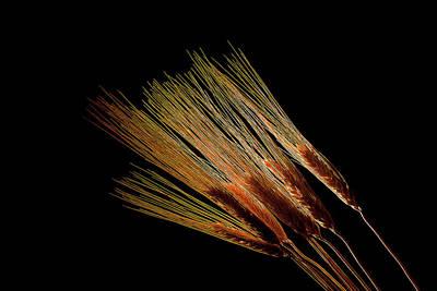 Photograph - Wheat 1 by Travis Burgess
