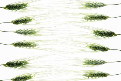 Photograph - Wheat 2 by Rebecca Cozart