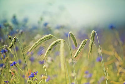 Flora Photograph - Wheat And Corn Flowers by Nailia Schwarz
