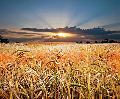 Meadow Photograph - Wheat At Sunset by Meirion Matthias