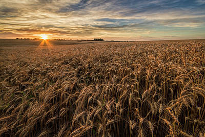 Scott Bean Rights Managed Images - Wheat at Sunset Royalty-Free Image by Scott Bean