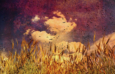 Photograph - Wheat Field Dream by Bob Orsillo