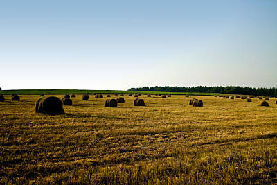 Art Print featuring the photograph Wheat Field by Gary Smith