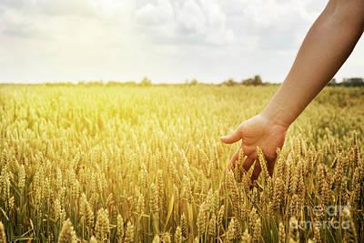 Production Photograph - Wheat Field by Jelena Jovanovic