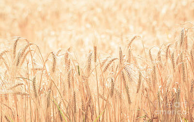 Photograph - Wheat Field Part Two by Cheryl Baxter