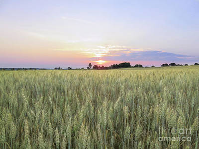 Photograph - Wheat Field Sunset by Marion Johnson
