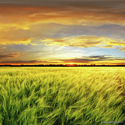 Wheat Field Sky Photograph - Wheat Field With Sunset by ©jesuscm