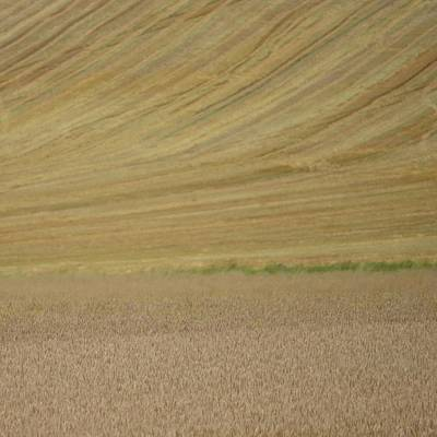 Photograph - Wheat Fields by Cheryl Miller