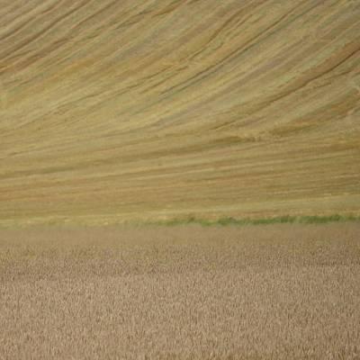 Photograph - Wheat Fields by Cheryl Miller