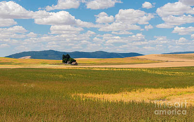 Photograph - Wheat Fields In The Palouse by Sharon Seaward