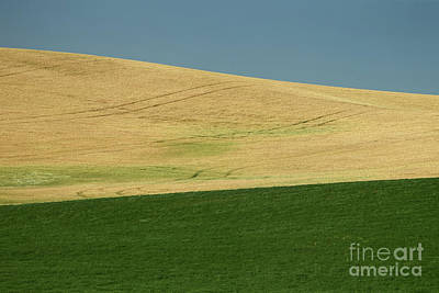 Photograph - Wheat Fields by Rick Mann