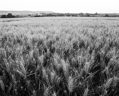 Photograph - Wheat Fields by Will Gudgeon