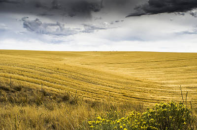 Wheat Fields With Storm Art Print by John Trax
