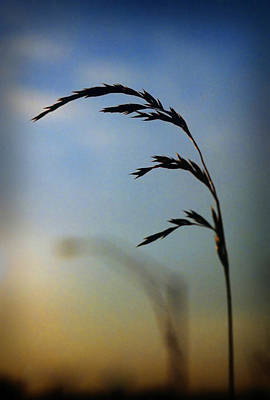 Wheat In Silhouette Art Print by Dave Chafin