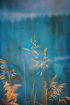 Photograph - Wheat On Blue 1 by Marilyn Hunt