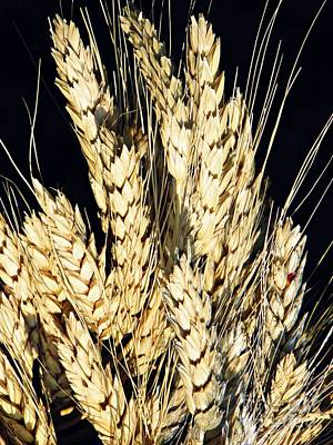 Photograph - Wheat by Sarah Loft