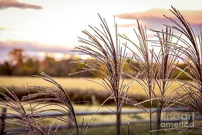 Wheat Sunset Art Print by Keith Rousseau