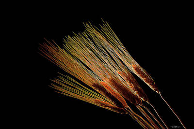 Photograph - Wheat by Travis Burgess