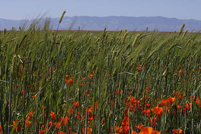 Art Print featuring the photograph Wheat With Poppy  by Ivete Basso Photography