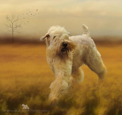 Terrier Digital Art - Wheaten Field Of Gold by Lisa Mullins