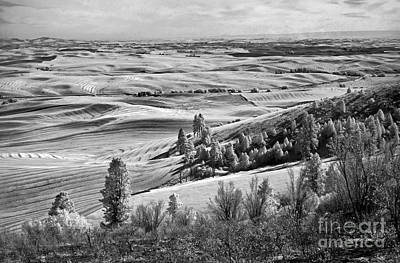 Photograph - Wheatfields Of Kamiak Butte by Martin Konopacki