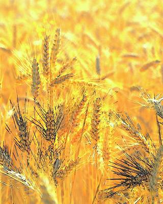 Jerry Sodorff Royalty-Free and Rights-Managed Images - Wheatscape 6344 by Jerry Sodorff