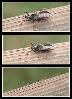 Photograph - Wheel Bug by Ericamaxine Price
