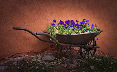 Wheelbarrow Full Of Pansies Art Print