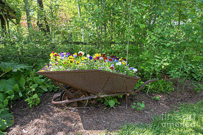 Photograph - Wheelbarrow Of Flowers by David Arment