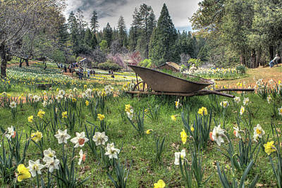 Photograph - Wheelbarrow On Daffodil Hill by SC Heffner