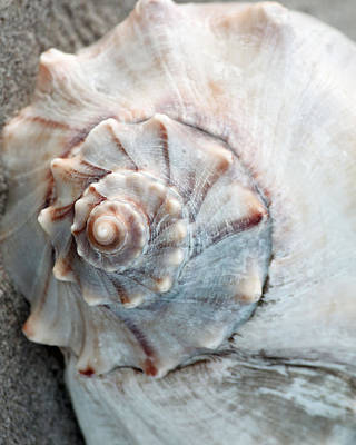Photograph - Whelk by Captain Debbie Ritter
