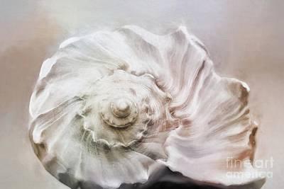 Whelk Shell Art Print