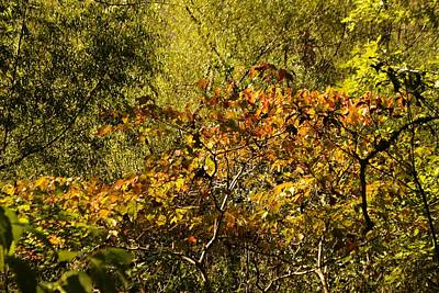 Photograph - When Autumn Begins by rd Erickson