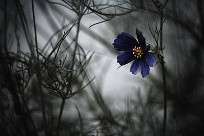 Cosmos Photograph - When Cosmos Will Be Blue by Fabien Bravin