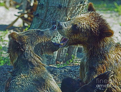 Photograph - When Grizzlies Play II by Larry Nieland